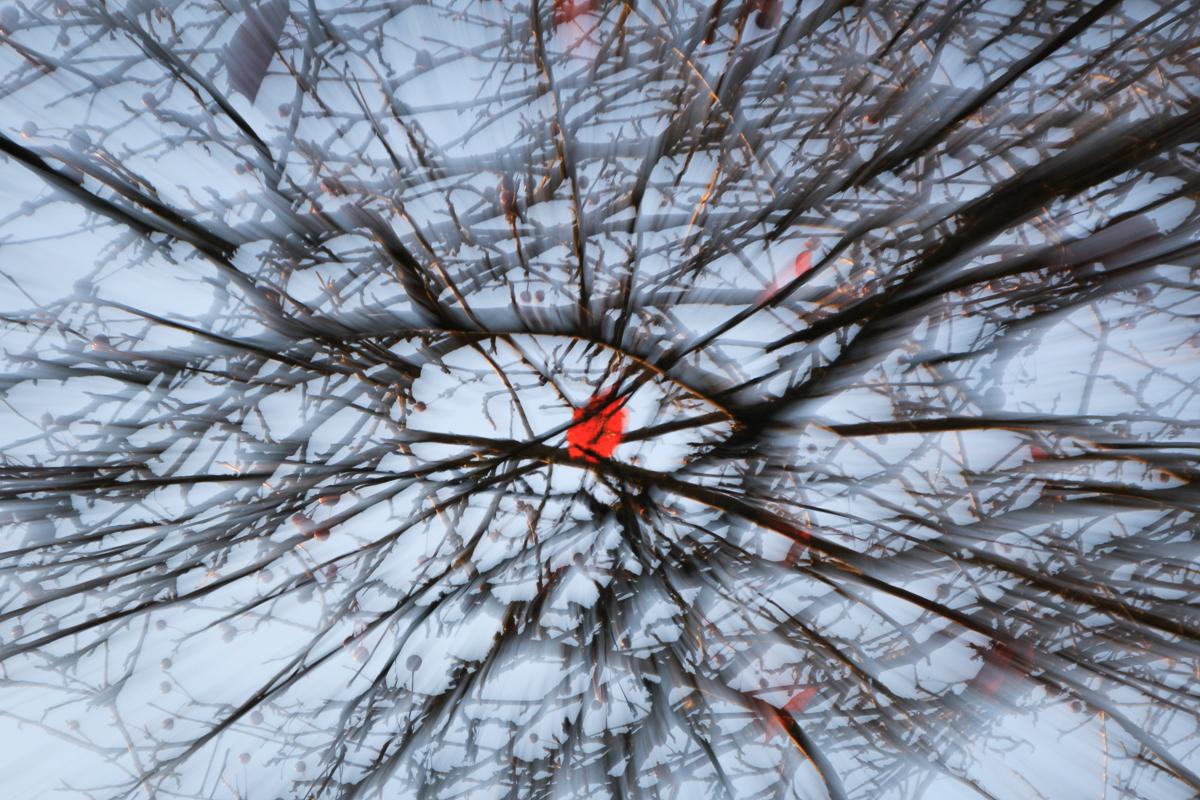 Zoom burst eines einzelnen roten Blattes in kahlen Zweigen gegen einen hellblauen Himmel. Bei dieser ICM (intentional camera movement) Technik erscheint alles als würde es von einem zentralen Punkt wegfliegen. Nur das rote Blatt wirkt als Ruhepunkt im Astgewirr.