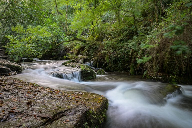 Kreative Landschaftsfotos: Fluss mit S-Kurve im Wald durch Langzeitbelichtung verwischt