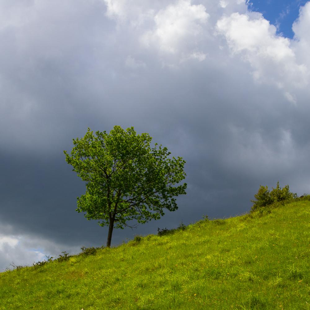 Einzelner Grüner Baum auf Hangwiese vor dramatischer Wolke als Beispiel für fehlende Tiefe in Landschaftsfotos