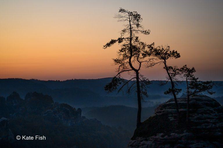 Elbsandsteingebirge Baumsilhouette im Sonnenaufgang