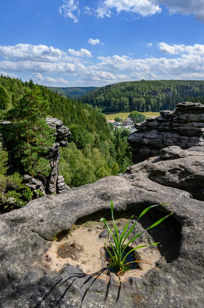 Landschaftsfotografie im Bielatal, ein Hochkant-Foto vom Felsen in das grüne Tal mit natürlich gewachsenem grünen Pflänzchen in einer Sandsteinkuhle im Vordergrundandstein