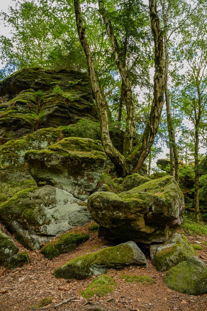 Felsen im Wald mit hohen Kontrasten im RAW Format fotografiert, da sich dann noch mehr Details heraus holen lassen.