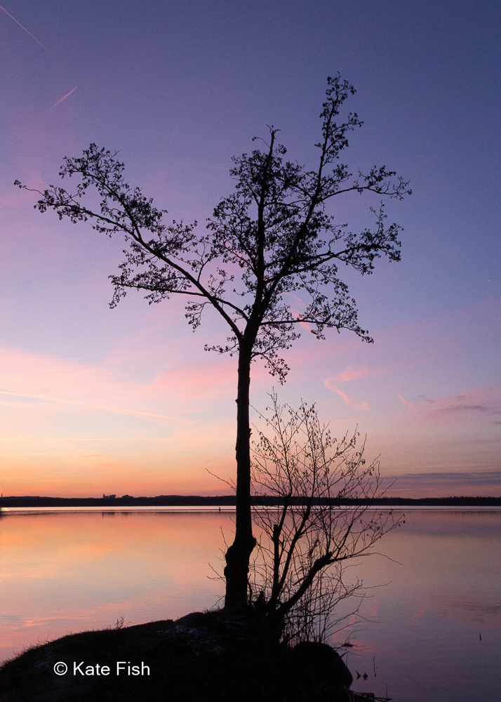 Fotografie Kurs - schöne Winterbilder vor der Haustür, Baum am See als Silhouette im Abendlicht ohne die Sonne im Hintergrund, aber im Hintergrund pink lila Licht, strahlt kühle Winteratmosphäre aus auch ohne Schnee und Frost aber farbenfroh