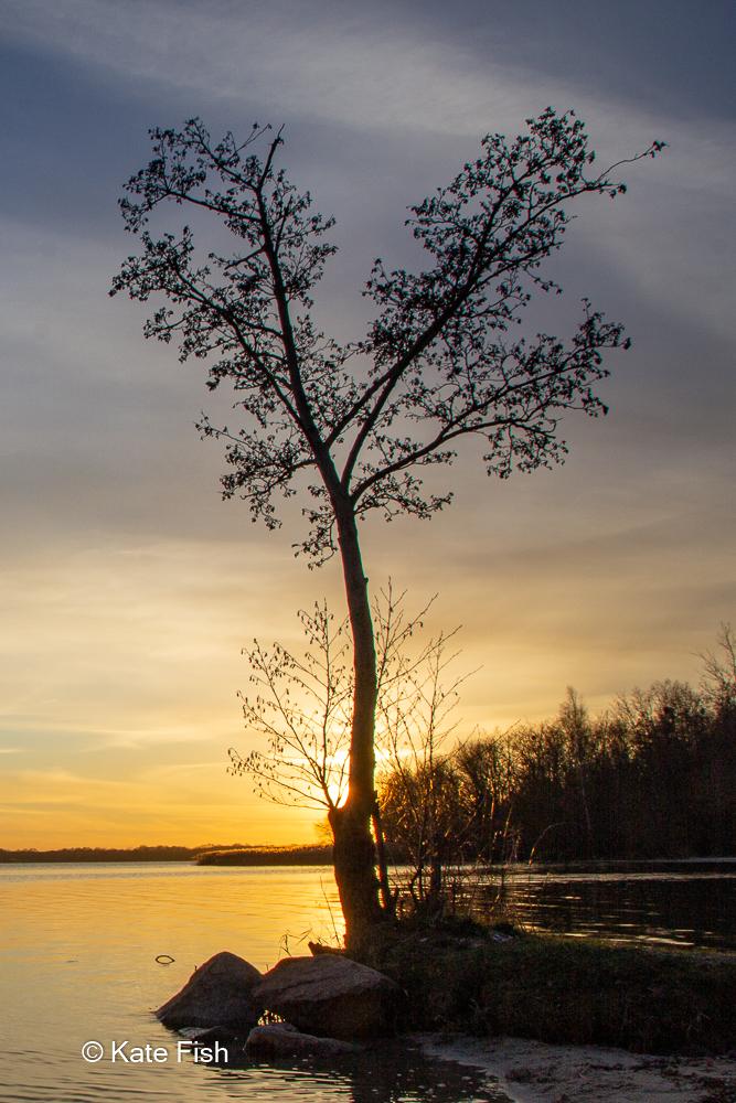 Fotografie Kurs zu Lanschaft vor der Haustür, Baum am See als Silhouette in der Abendsonne mit Schilf im Hintergrund und goldenem Licht