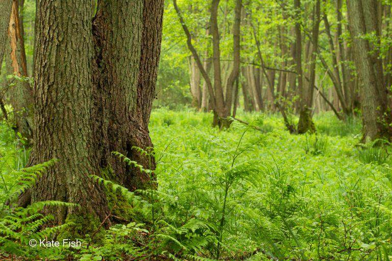 Baumstamm im Vordergrundund relativ scharfer Hintergrund wodurch keine gute Vereinzelung des Baumstammes entsteht und alles wie eine grüne Hölle wirkt als Gegenbeispiel zum nächsten Foto