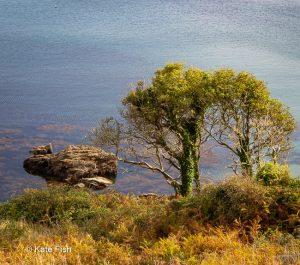 Baum an von der Steilküste Cornwalls herunter fotografiert mit blau türkisem Meer im Hintergrund als Beispiel für den Einsatz eines Teleobjektiv in der Landschaftsfotografie, da die Gegebenheiten eine geringere Entfernung nicht erlauben.