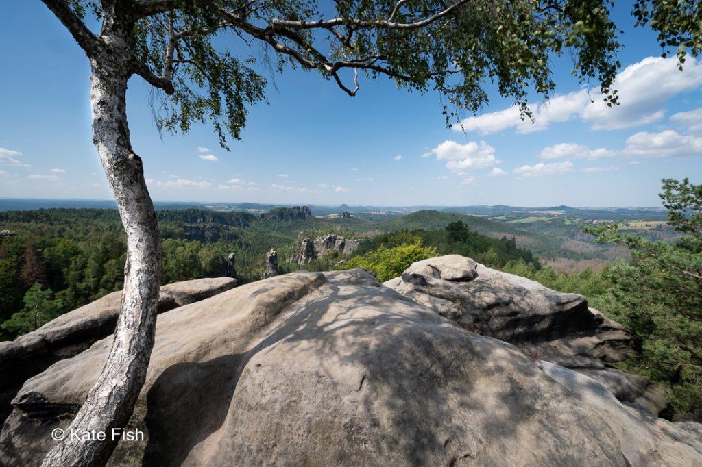 Blick vom Carolafelsen in die grüne Landschaft des Elbsandsteingebirge mit Weitwinkelobjektiv und der Felsplatte als Vordergrund fotografiert, dabei den Stamm und das Grün einer Birke als Rahmen links und oben im Bild.