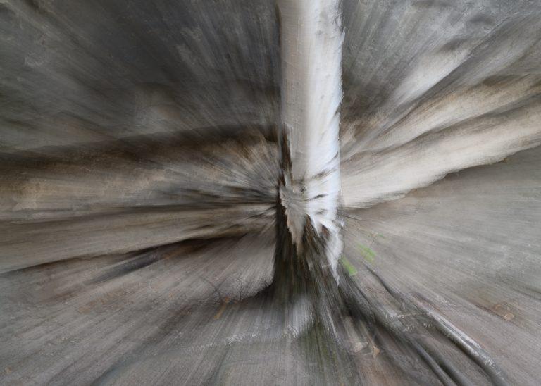 Zoom Burst (eine ICM Technik) einer Birke im Elbsandsteingebirge.