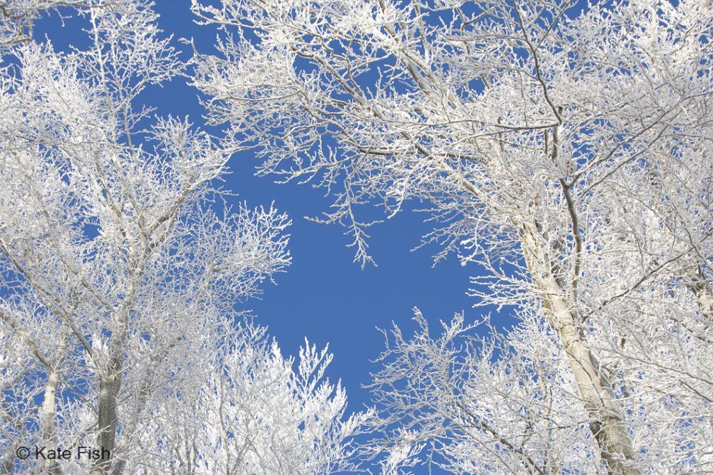 Blick in frostige Baumkronen einer Winterlandschaft für bessere Waldfotos