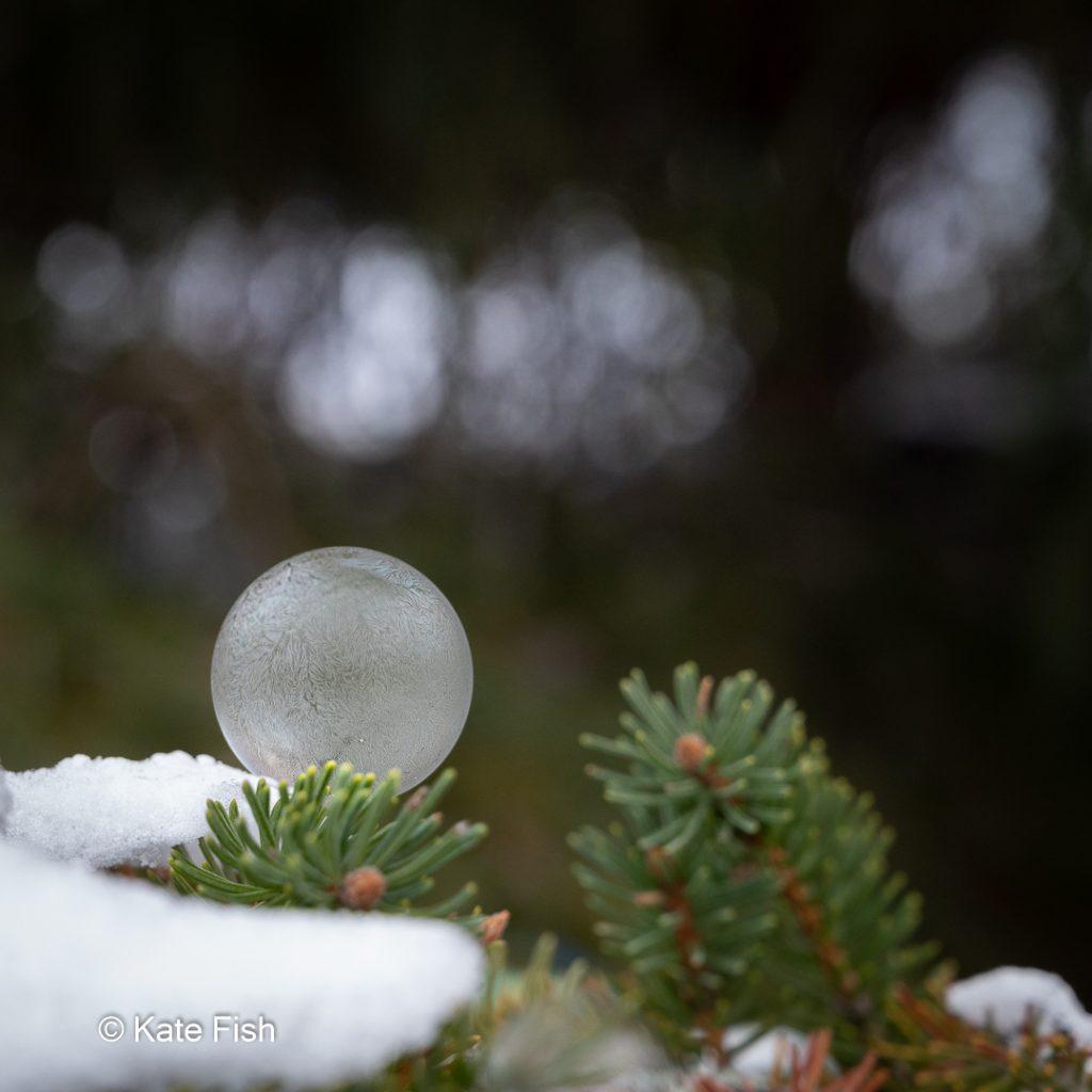 Gefrohrene Seifenblase auf Tannenzweig mit Schnee.Bokeh durch Lichtreflexe zwischen Tannennadeln