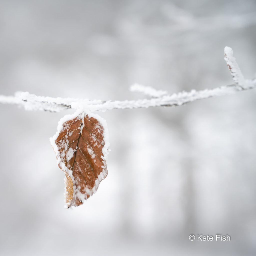 Mit Schnee umrandetes Buchenblatt mit unscharfen Bäumen als Bokeh im Hintergrund