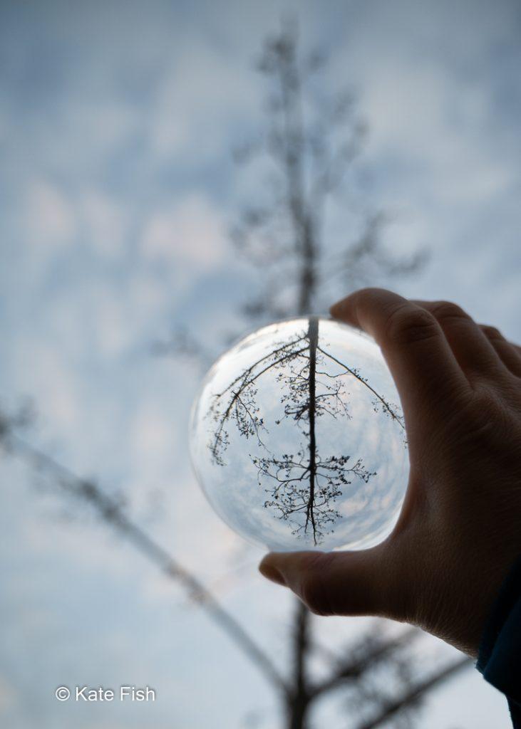 große Glaskugel vor einer Erle im Winter, die ihr Spiegelbild umgekehrt zeigt.