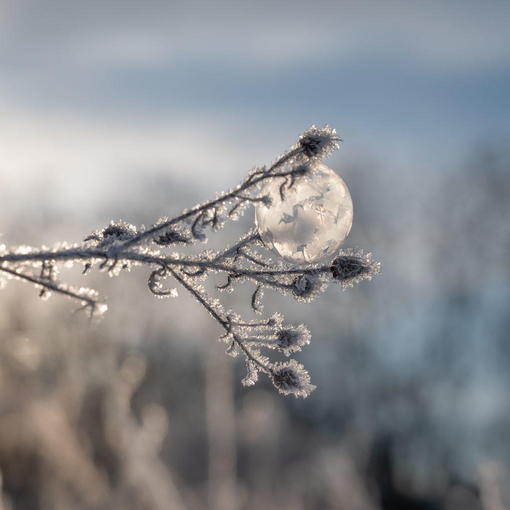 gefrorene Seifenblase im Morgenlicht auf frostigem Gras