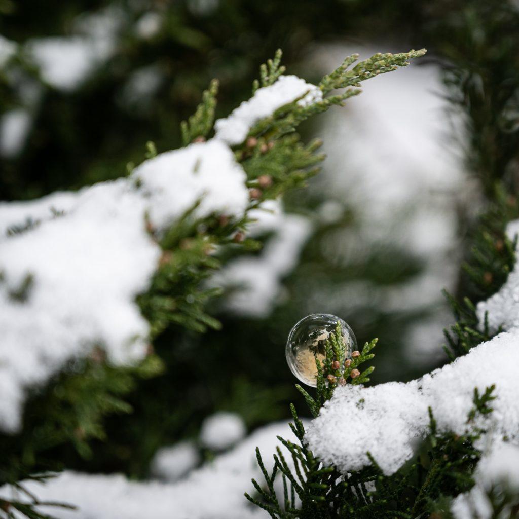 Nicht gefrorene Seifenblase auf schneebedeckter Tanne in schillernden Farben, aber ohne Kristalle