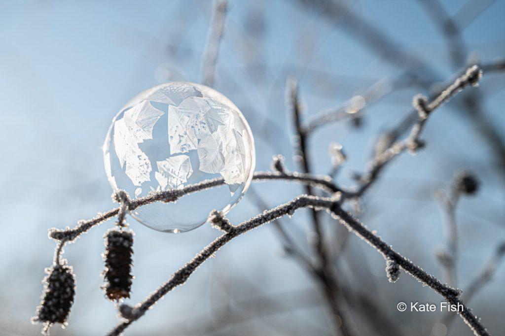 gefrorene Seifenblase auf Erlenzweig mit blauem Himmel als Hintergrund