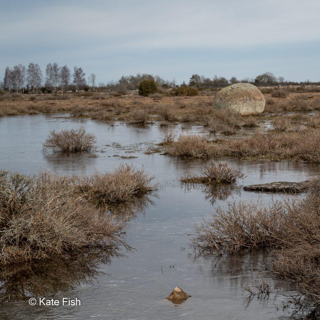 Karge Steppenlandschaft mit Wasserlachen, fast noch gefroren, eine kratzbürstige Schönheit auf der Insel Öland meiner Nr. 5 der Fotolocations in Schweden