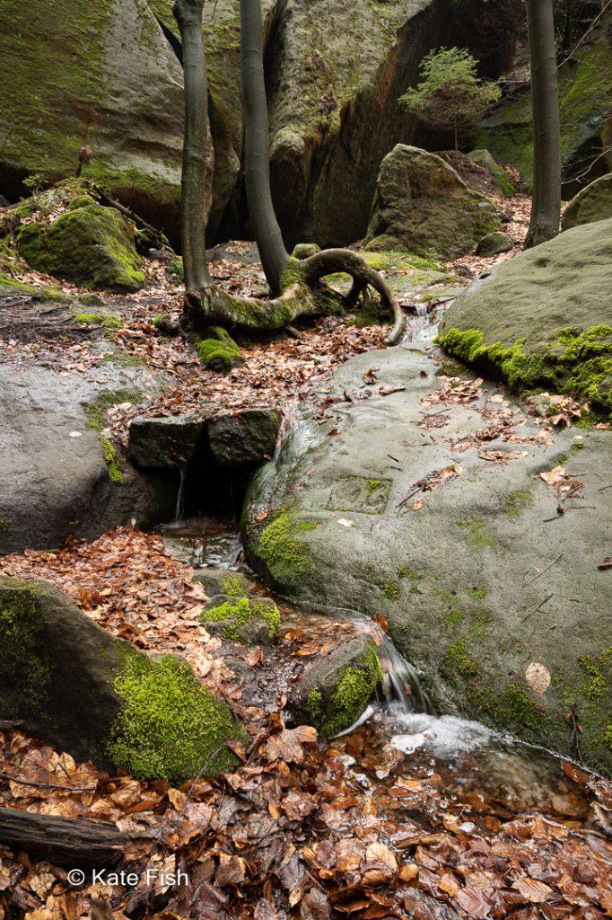 Waldszene mit Sandstein, Buchenblättern, einem kleinen Bach und einem Buchenstamm mit interessanter Wurzel. Grün und braun wirken vor und die Steine wirken recht glänzend durch die Spiegelung auf ihnen, die nicht durch einen Polfilter entfernt wurde