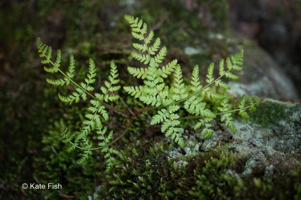 Farne als Beispiel für Konzentration auf Details beim Fotografieren im Wald