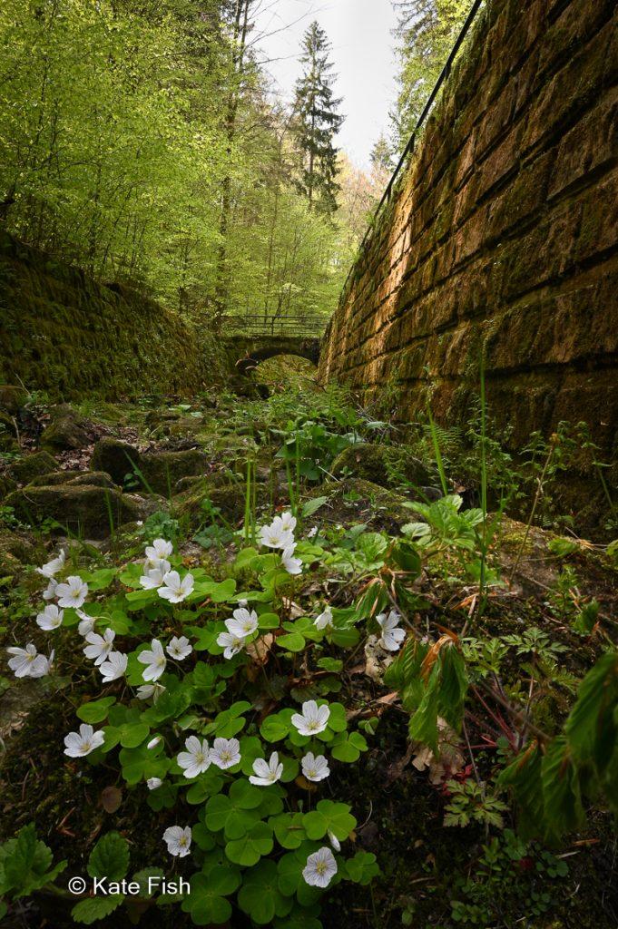 Focusstack im Wehlerner Grund im dunklen Bachtal zur Illustration des Nutzens eines Stativs bei wenig Licht zum Fotografieren im Wald.
