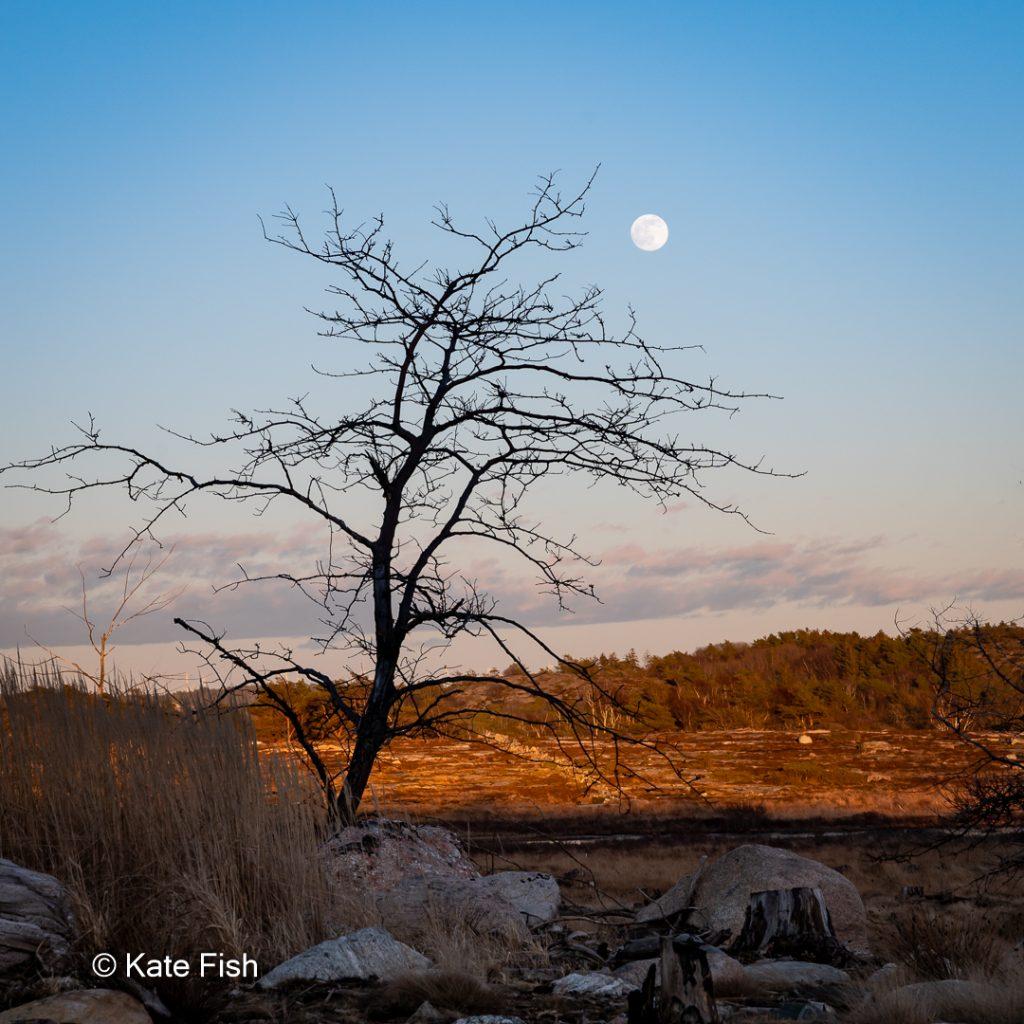 Vollmond über einer Baumsilhouette im Tjurpannan Naturreservat - eine ganz besondere Fotolocation an der Westküste Schwedens