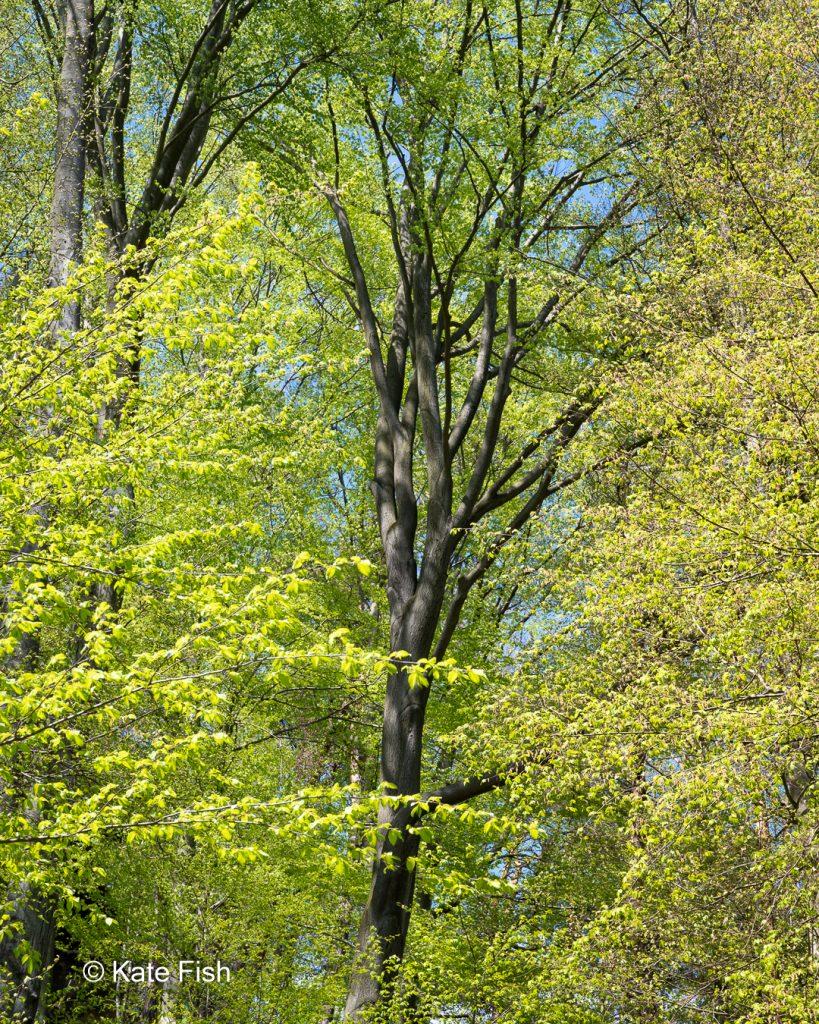 Unterschiedliche leuchtende Grüntöne der Bäume im Frühjahr zeigen die Herausforderungen beim Fotografieren im Wald