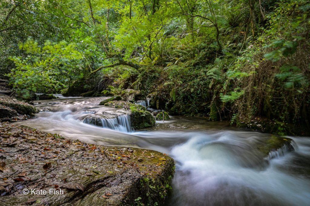 Langzeitbelichtung eines Baches als Beispiel für die Nutzung eines Stativs beim Fotografieren im Wald und zur Erzeugung kreativer Landschaftsfotos.