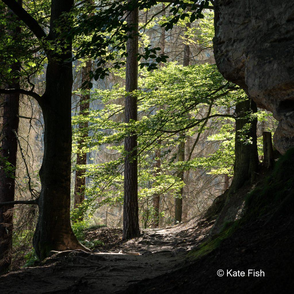 Lichtschneise auf einen beblätterten Ast um das Fotografieren im Wald nicht zur grünen Hölle werden zu lassen