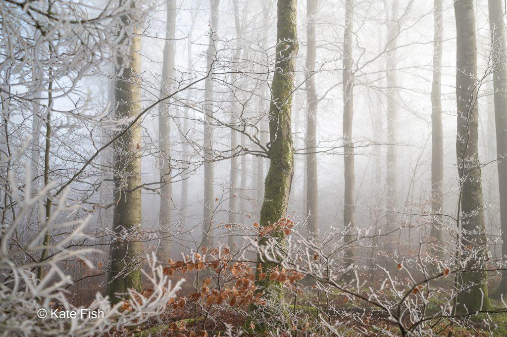 Fotografieren im Wald im Winter als Alternative zur grünen Hölle im Sommer