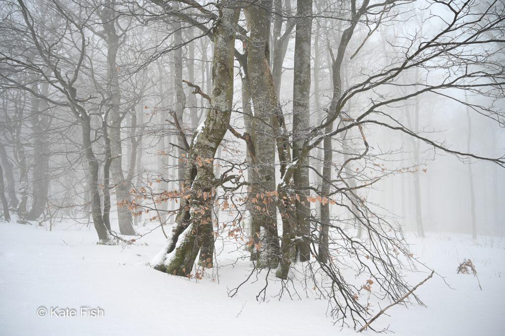Bäume Fotografieren im Wald im Schnee als Alternative zur grünen Hölle im Sommer