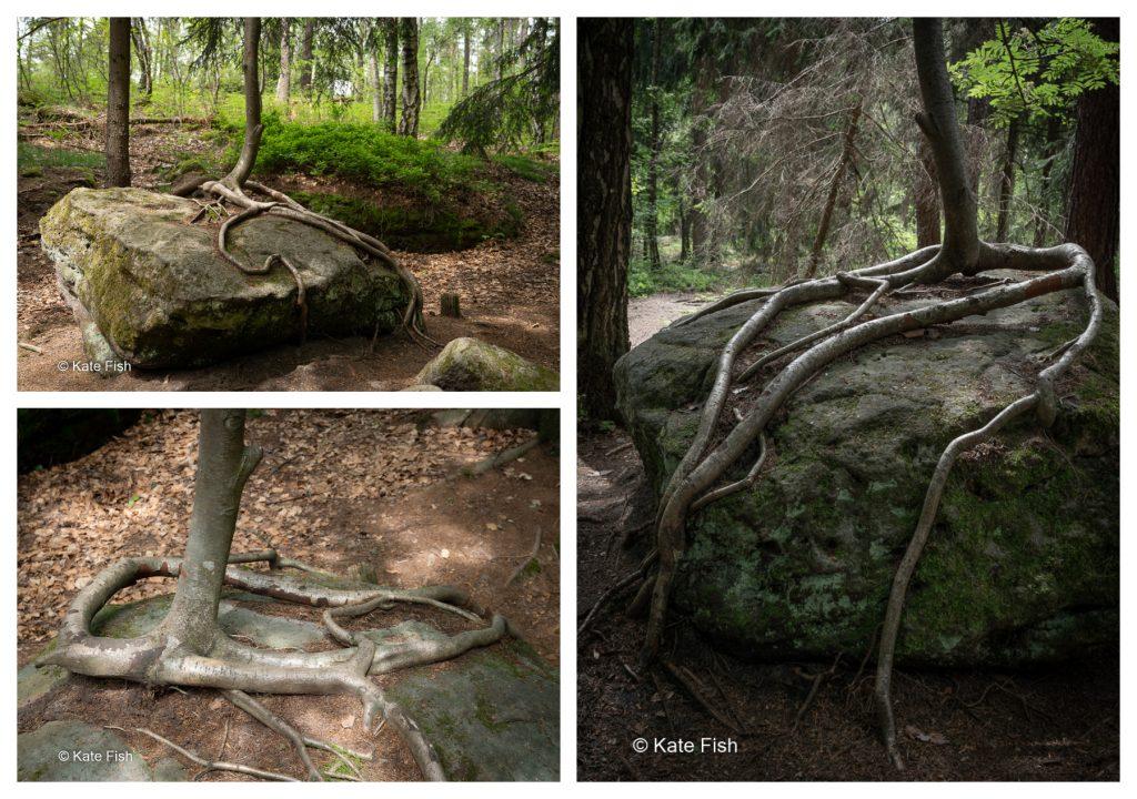Unterschiedliche Perspektiven auf eine Wurzel für bessere Waldfotos