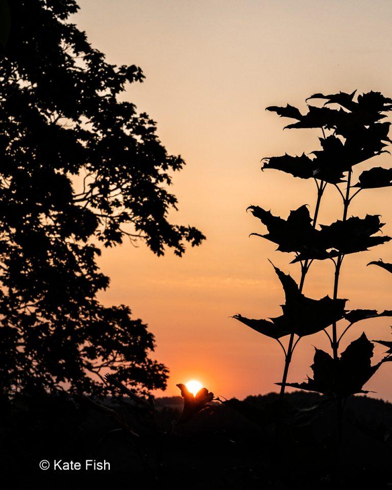 Silhouetten von Bäumen, aber besonders einer Blume, die die untergehende Sonne hält