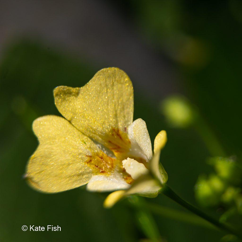 Springkrautblüte als Illustration für bessere Waldfotos durch Fokus auf Details