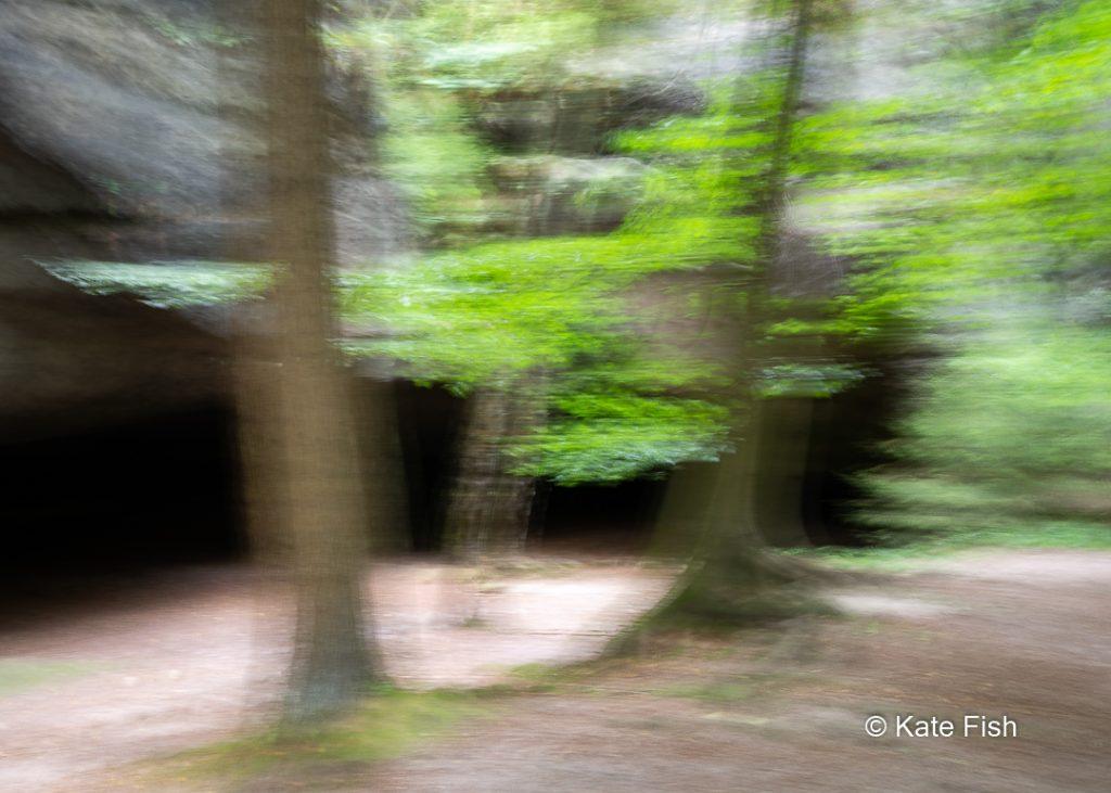 Bessere Waldfotos durch kreative Kamerabewegung, hier 3 Bäume kreativ verwischt