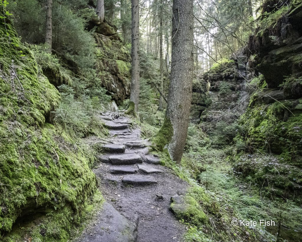 Bessere Waldfotos durch Konzentration auf ein stark abgegrenztes Detail, wie hier einen steinigen Waldweg