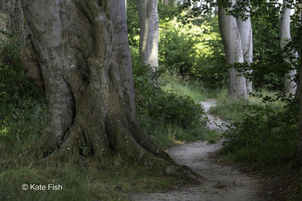 Nutzen von Wegen als Führungslinien beim Fotografieren im Wald