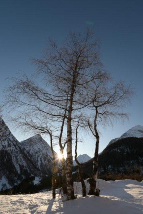 Winterlandschaft fotografieren - Gegenlichtaufnahme mit Birke im Vordergrund, Sonne mit Strahlen dahinter hervorlukend und Berge im Hintergrund. Aufgenommen in Saas-Fee